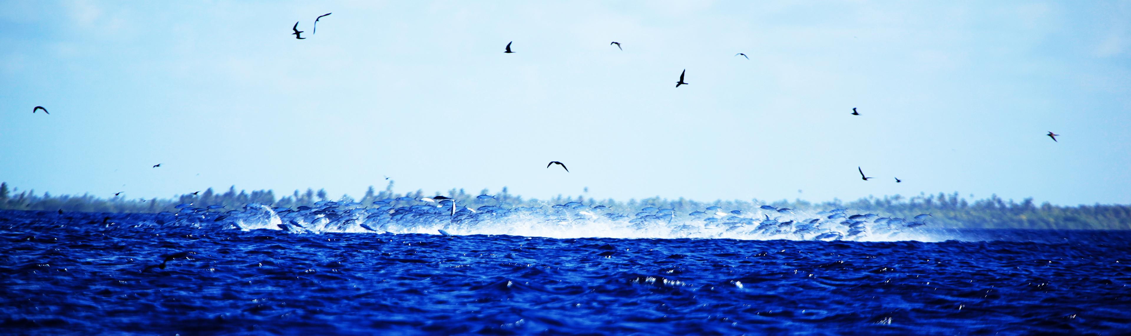 Tuamotu Islands