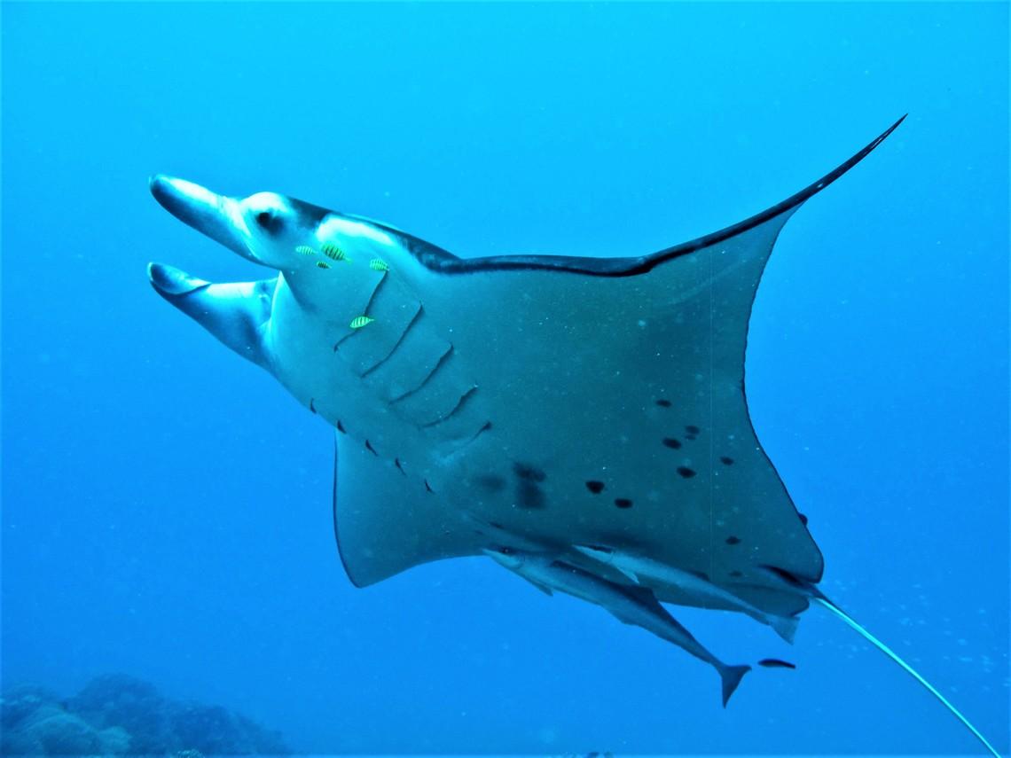https://tahititourisme.es/wp-content/uploads/2017/08/Bora-Bora-Reef-Discovery-3.jpg