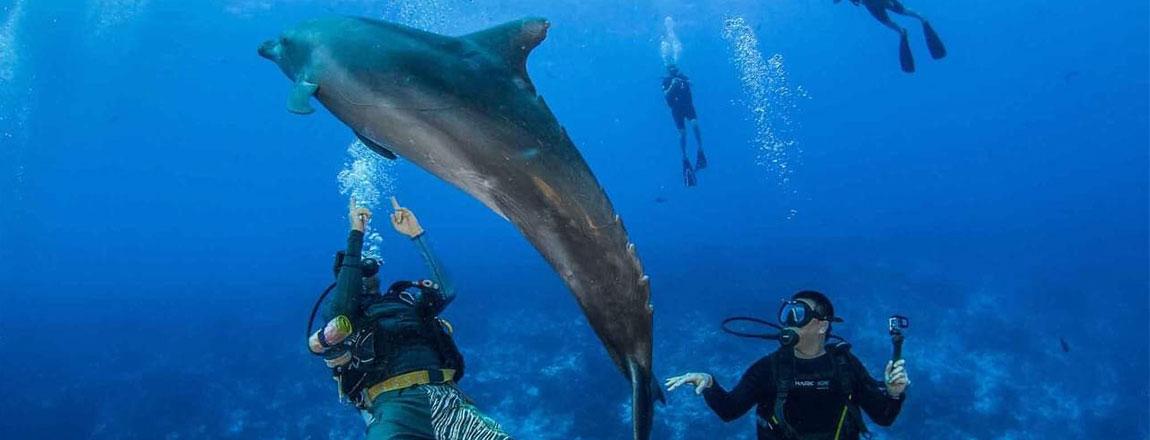 https://tahititourisme.es/wp-content/uploads/2017/10/Rangiroa-Diving-Center-1150x440px.jpg