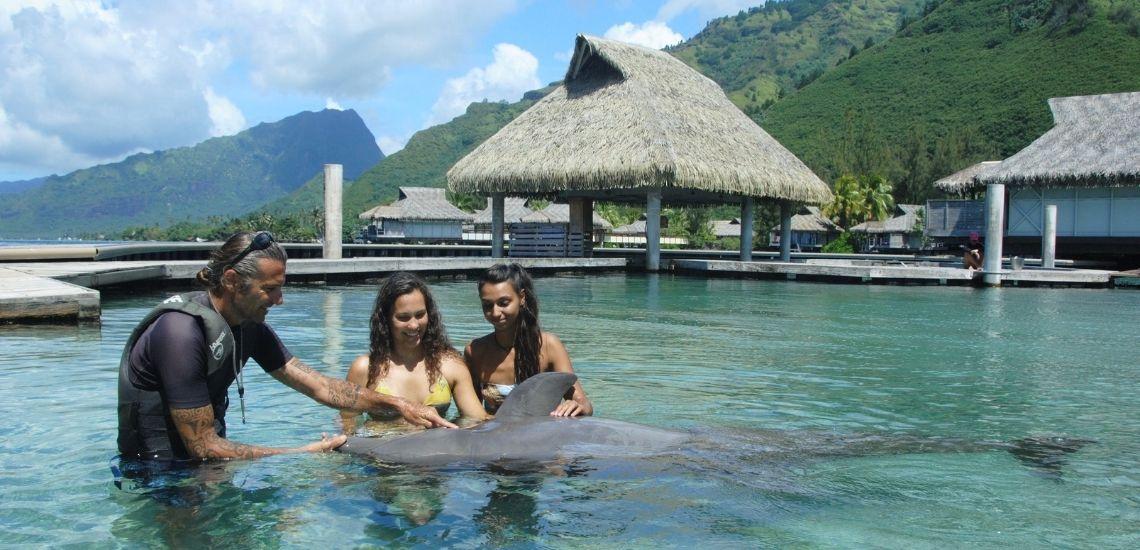 https://tahititourisme.es/wp-content/uploads/2021/01/Offre_Moorea-Dolphin-Center.jpg
