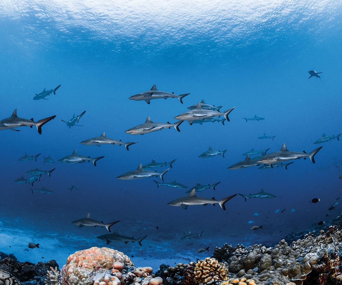 https://tahititourisme.es/wp-content/uploads/2021/06/sejours-plongees-aquatiki-fakarava-mur-requin-e-tahiti-travel.jpeg