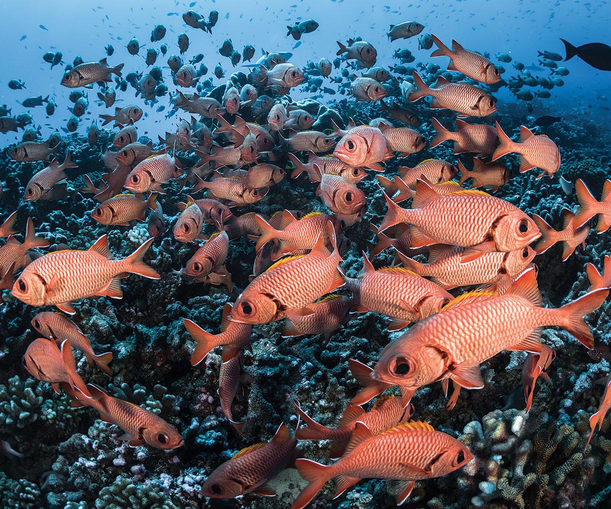 https://tahititourisme.es/wp-content/uploads/2021/06/sejours-plongees-aquatiki-fakarava-poissons-e-tahiti-travel-2.jpeg
