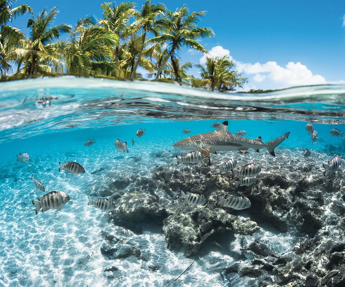 https://tahititourisme.es/wp-content/uploads/2021/06/sejours-plongees-aquatiki-fakarava-requin-e-tahiti-travel-3-1.jpeg