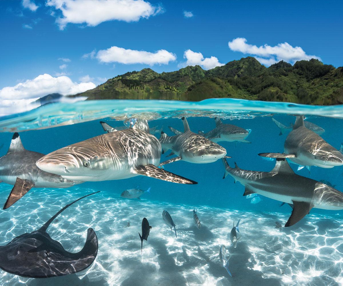 https://tahititourisme.es/wp-content/uploads/2021/06/sejours-plongees-tahiti-moorea-e-tahiti-travel_jpg-1.jpeg